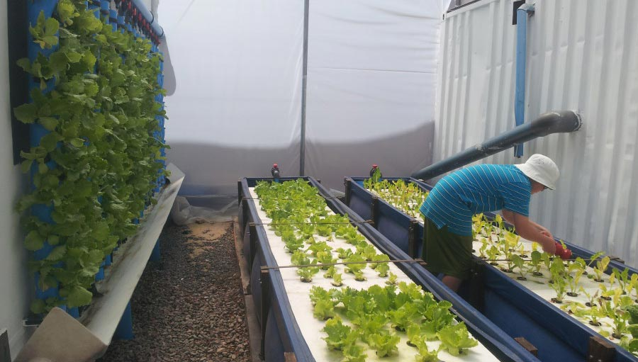 aquaponics farming in container
