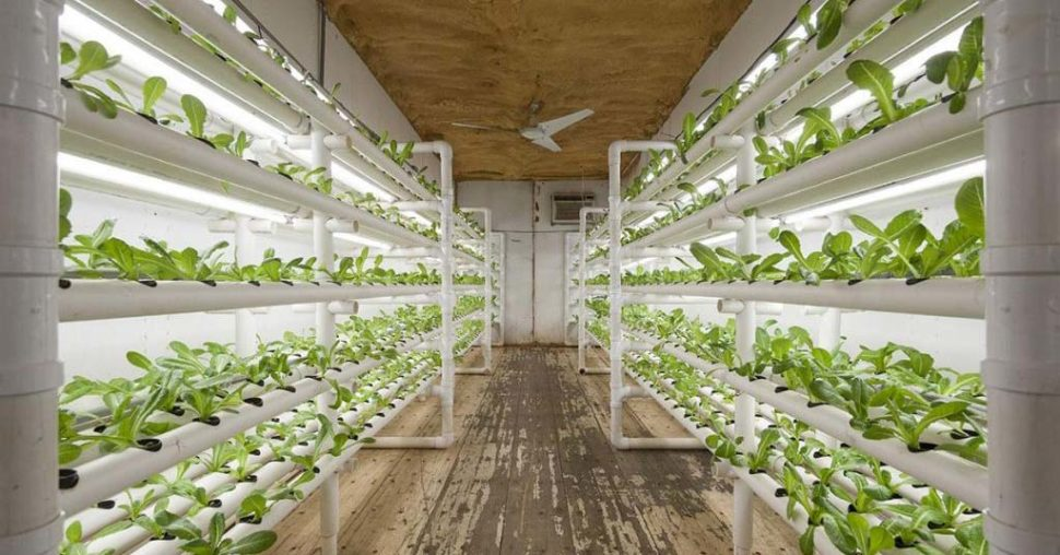 shipping container farms