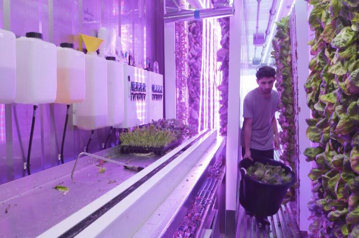 square roots container farming