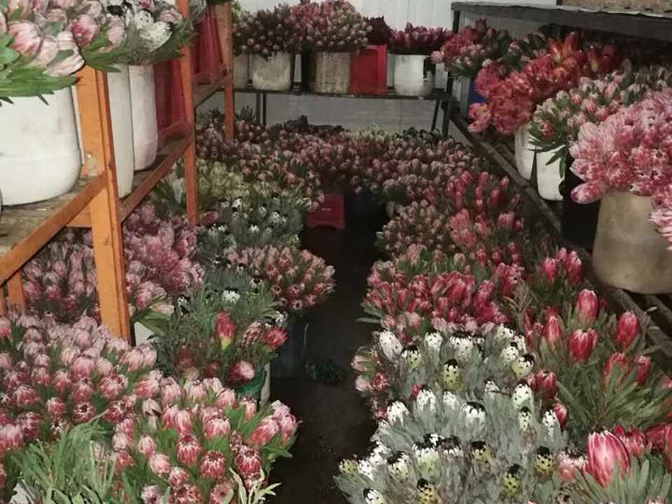 protea storage cullifest
